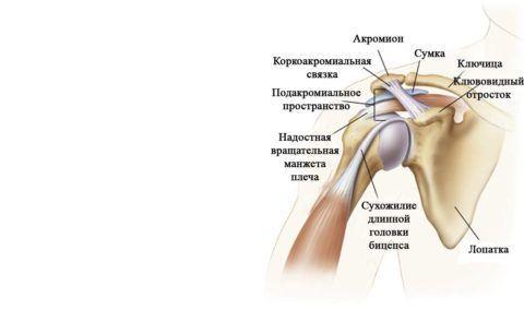Вокруг сустава находится несколько связок