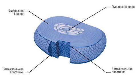 Межпозвоночный диск