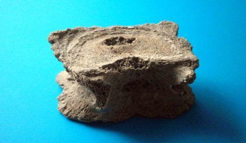 На фото, центральная каверна на теле Apex ossis sacri (фрагмента первого крестцового позвонка)