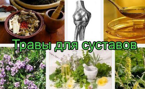 Сборы трав для лечения артроза -