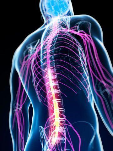 Зачем нужен этот отдел центральной нервной системы?