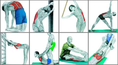 В работу включаются не только мышцы спины