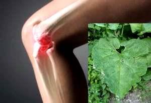 Солидол для компресса при больных суставах можно наносить на лист лопуха или хрена.