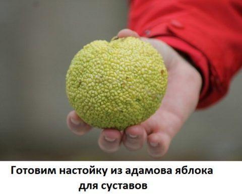 Эти плоды подойдут в качестве основного ингредиента для настоек.