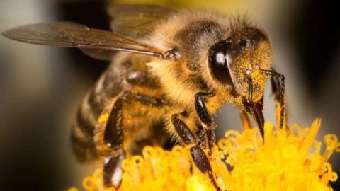 Доктор пчела поможет справиться с болью в спине