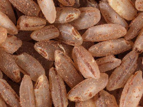 Для лечебного питания предпочтителен бурый рис, в нём больше полезных веществ