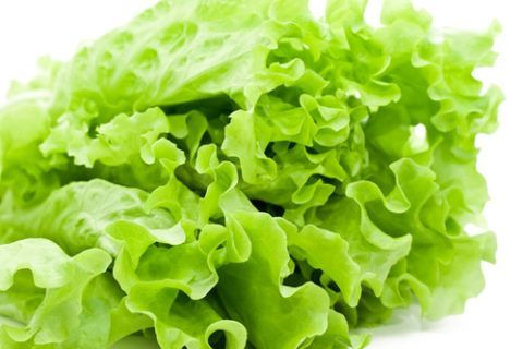 На фото салат-латук