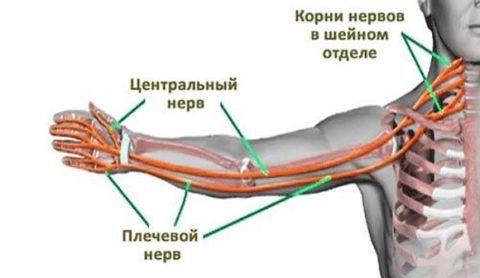 При повреждении нервных корешков в области соединения костей плеча упор делается на обезболивающие и противовоспалительные препараты.