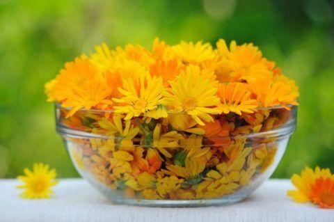 На фото цветки календулы