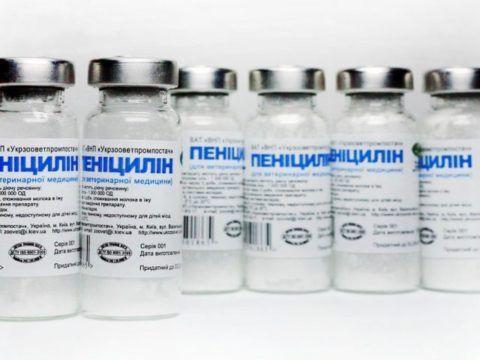 Порошок для приготовления раствора для внутримышечного введения при поражении суставной ткани бактериями.