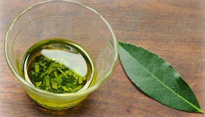 Перед приготовлением лечебных напитков листья лавра следует обязательно измельчать