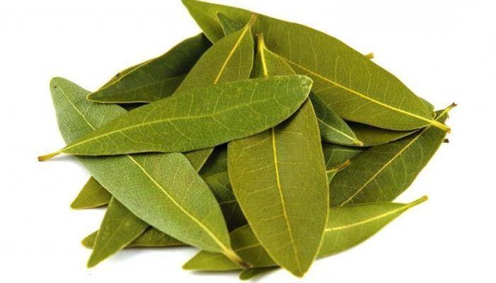 Сочетание листьев лавра с другими компонентами усиливает свойства основного средства