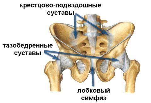 Анатомическое строение суставной ткани крестцово – подвздошного отдела.