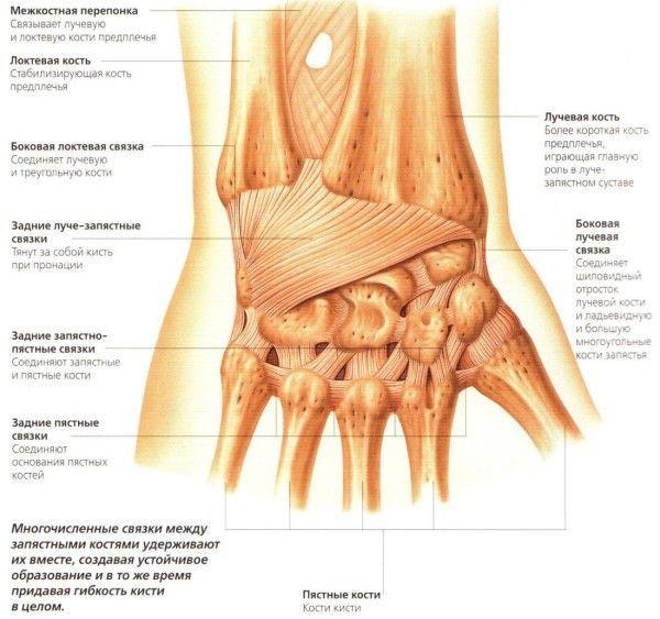 Растяжение связок лучезапястного сустава: причины, симптоматика и лечение патологии