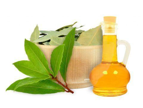 Лавровое масло – одно из лучших обезболивающих и противовоспалительных средств.