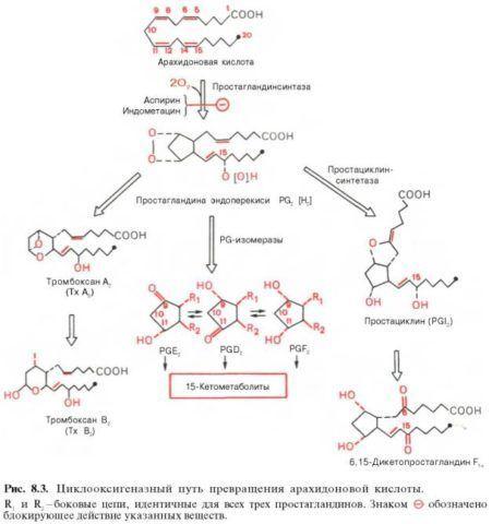 Механизм действия НПВС основаны на угнетении синтеза простагландинов (на фото) – медиаторов воспаления и восприятия боли