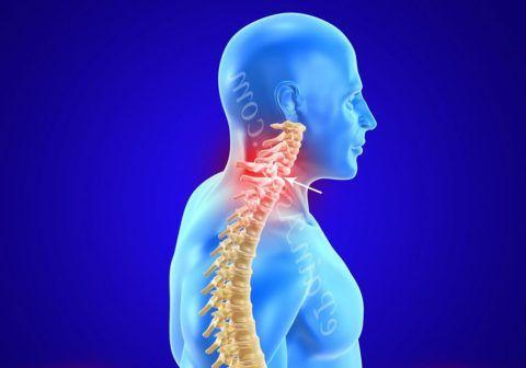 Место локализации боли при нарушении суставной ткани шейного отдела позвоночника.