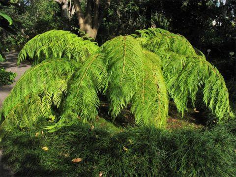 Растение во время активного роста