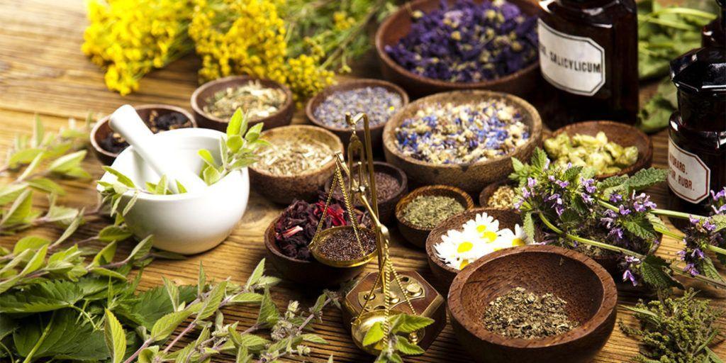 Лечение травами остеохондроза: рецепты и советы народной медицины