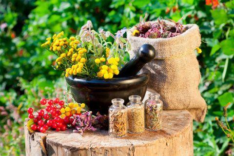 Избавиться от остеохондроза поможет лечебная сила различных лекарственных растений.