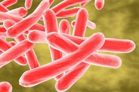 Кислотоустойчивые палочки – основной возбудитель туберкулеза
