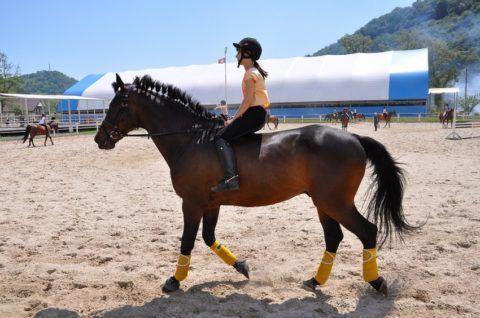 На фото конный спорт