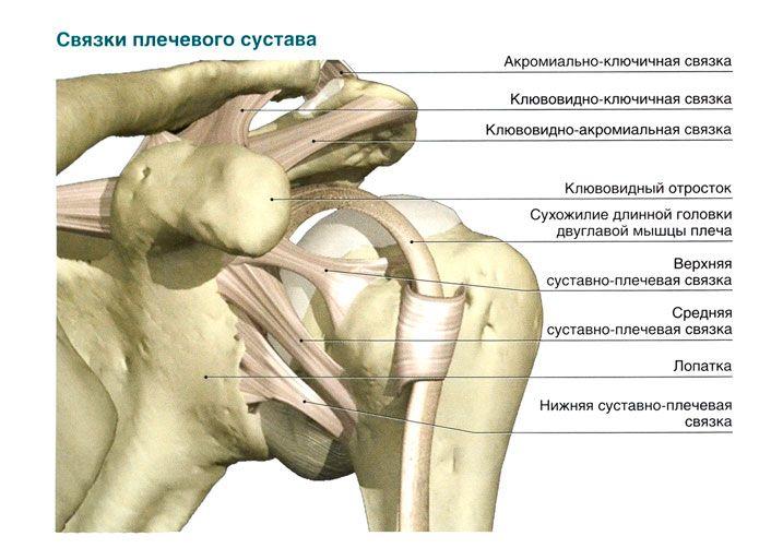 Заболевания плечевого сустава. Виды патологического процесса, симптоматика и современные методы лечения
