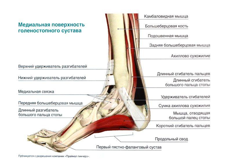 Бандаж на голеностопный сустав при травмировании тканей: виды и особенности применения