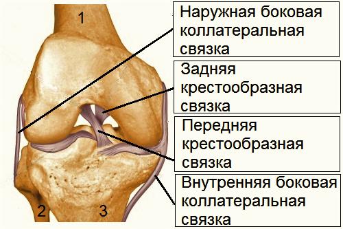 Растяжение связок коленного сустава – лечение и упражнения для их укрепления