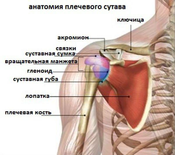 Как выполняют МРТ плечевого сустава