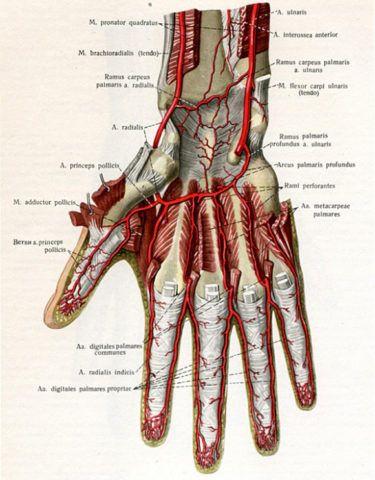 Изображение - Воспаление лучезапястного сустава лечение krovosnabzhenie-375x480