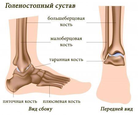 Строение анатомического образования