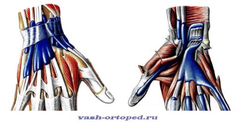 Сухожильные влагалища, расположенные в области лучезапястного сустава и запястья