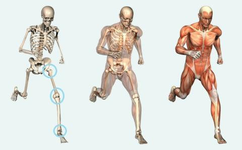 О 3 суставах ноги знают все, но на самом деле костных сочленений в ней гораздо больше