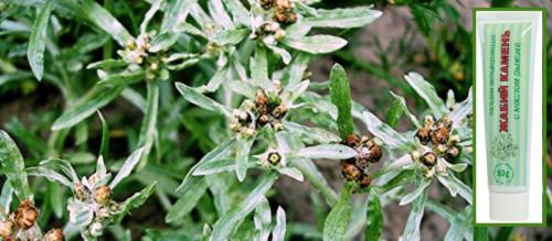 Название дано в честь главного компонента — лекарственного растения Жабник полевой