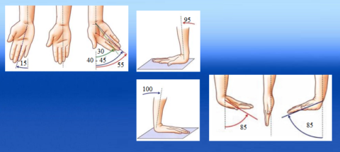 Направления векторов и норма амплитуды движений (в градусах) в лучезапястном суставе