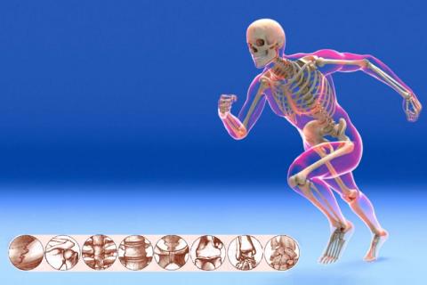 Синдесмология — раздел анатомии о подвижных и неподвижных соединениях частей скелета