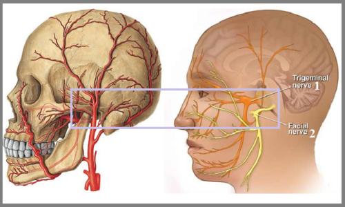 Область височно-нижнечелюстного сустава богата кровеносными сосудами и нервами
